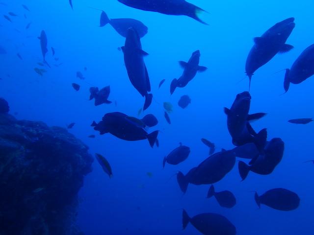 海洋保護区オランゴ島の海