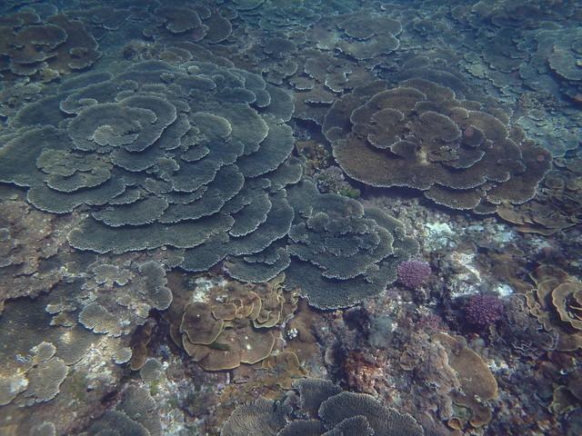 壮観なサンゴ礁