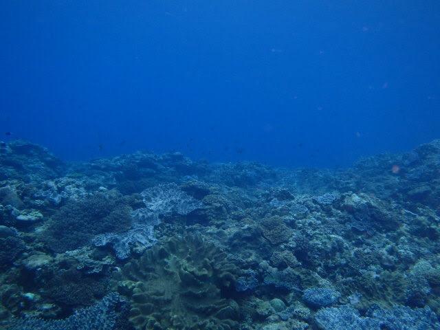 奄美大島でダイビング