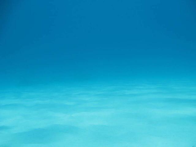 真っ白な砂地が広がる水中